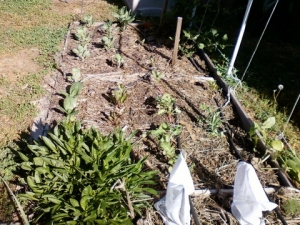 Neighborly Sun & Shade : Backyard Gardening Lightens Up
